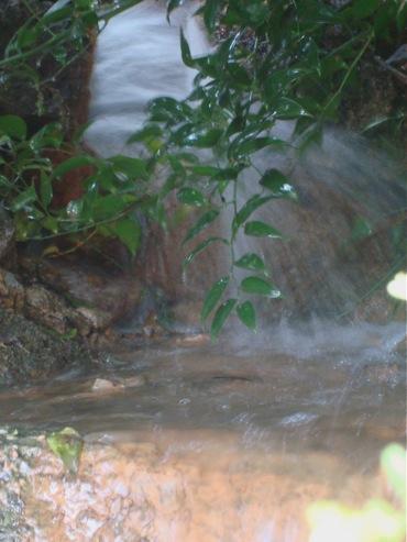 Et des odeurs sublimes alina reyes for Au jardin des plantes chambery