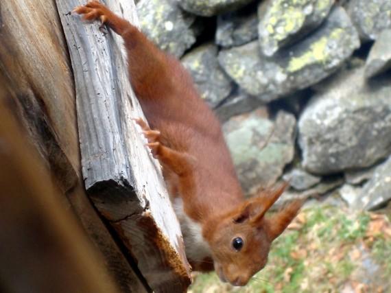 écureuil3