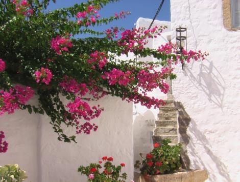 rue, Patmos,