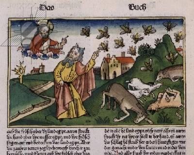 1562498nuremberg-bible-nuee-insectes-jpg