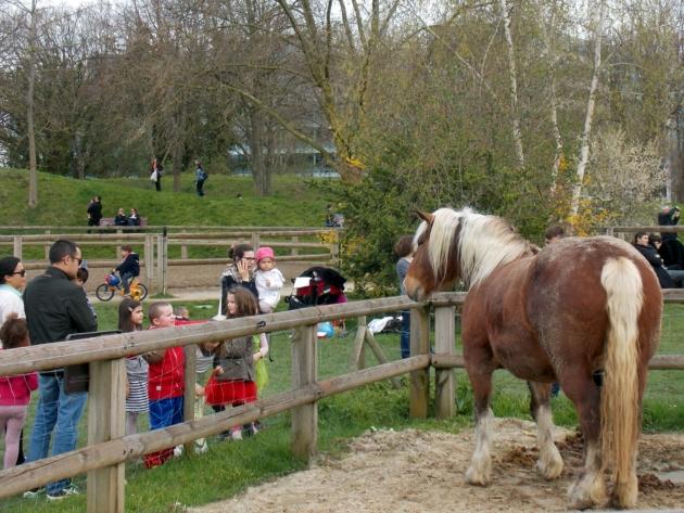 issy les moulineaux poney