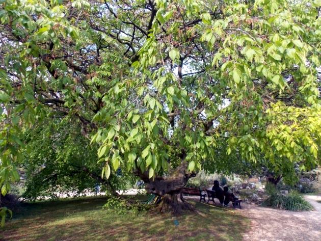 Le jardin alpin du jardin des plantes et son antique for Animalerie du jardin des plantes