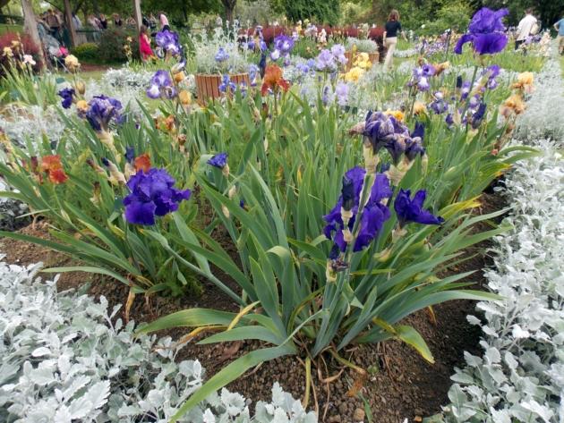 jardin des plantes 11