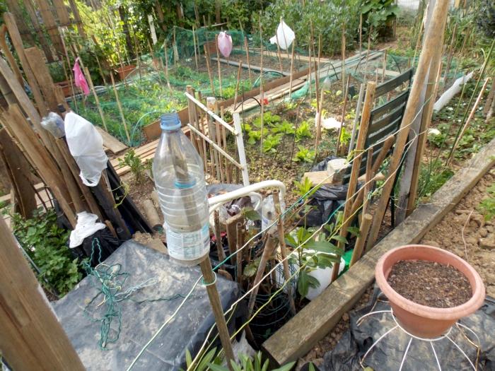 jardin partagé 5