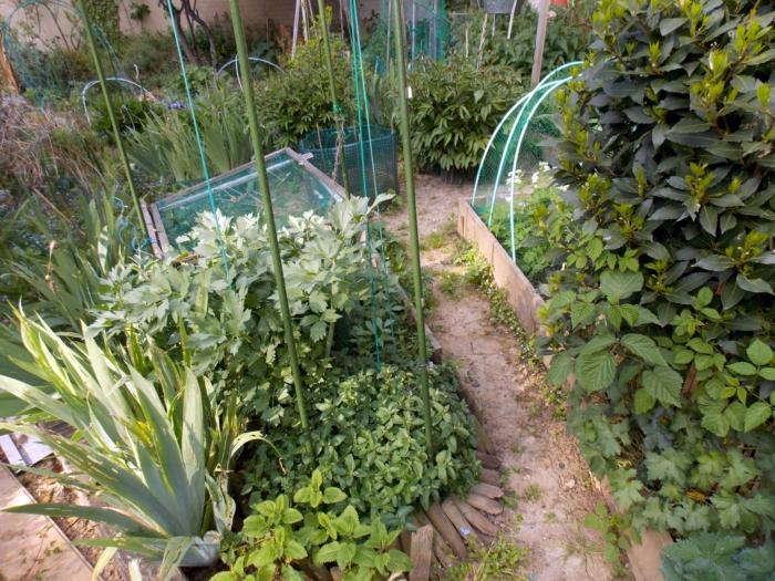 jardin partagé 6