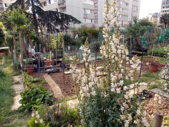 jardin partagé 7