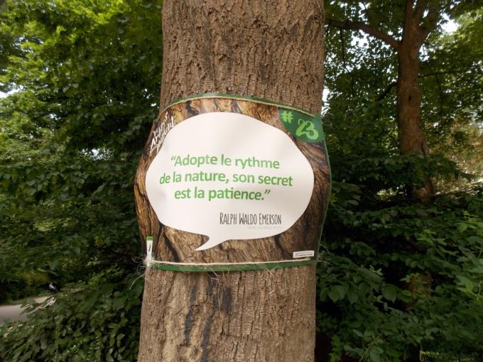 arbre qui parle 11