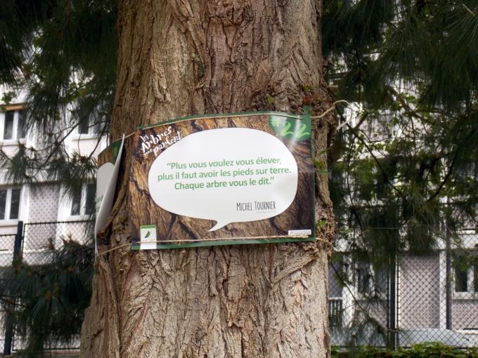 arbre qui parle 12