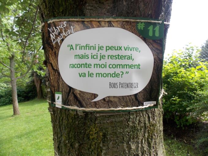 arbre qui parle 4