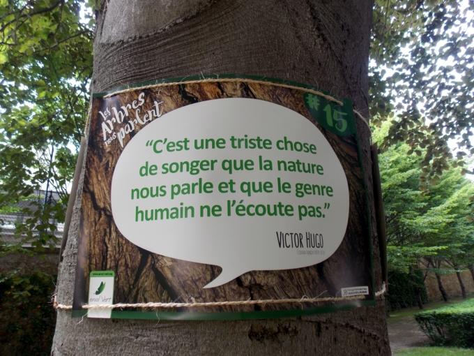 arbre qui parle 6