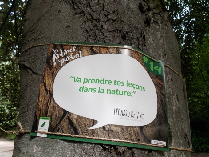 arbre qui parle 7