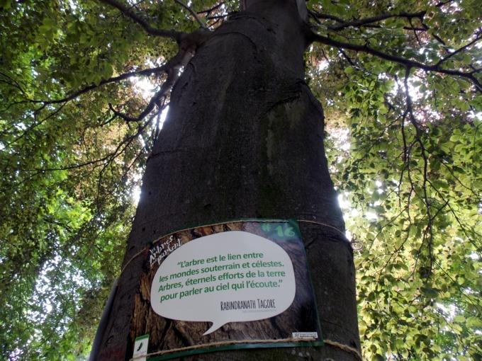 arbre qui parle 8