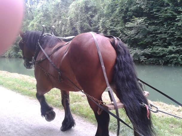 cheval beckett