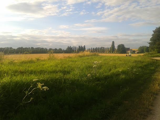 paysage beckett