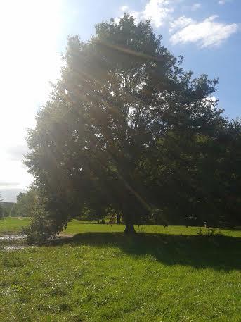 arbre bievre