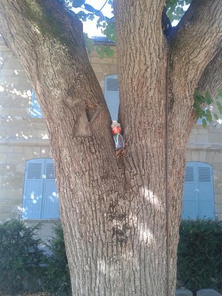 mme terre dans l'arbre bernardin saint pierre