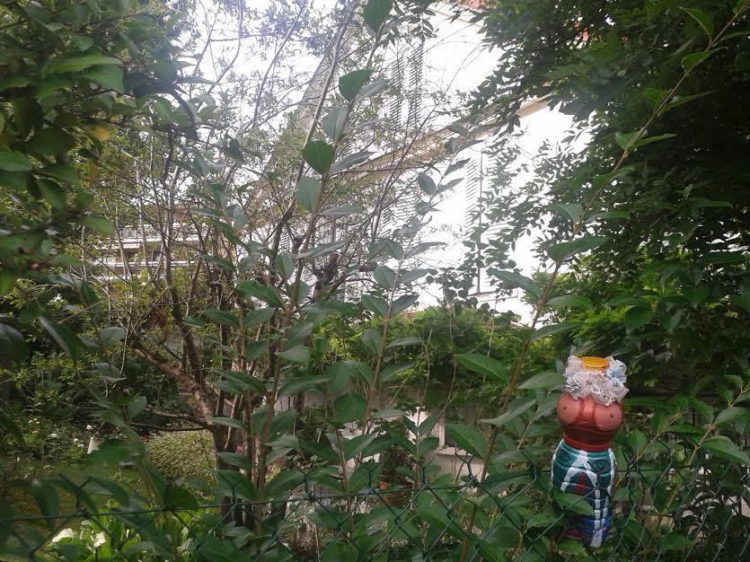 mme terre jardin pierre curie