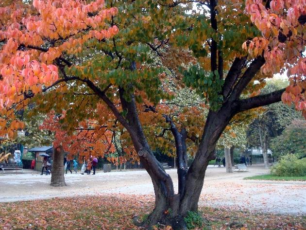 arbre-rouge-sous-la-pluie
