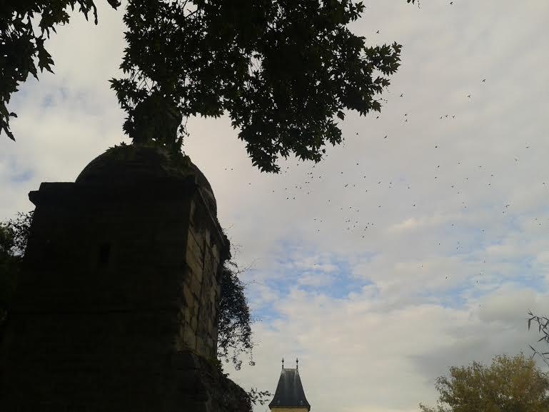 oiseau-chateau-medan