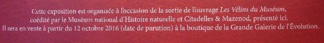 velins-naturalistes-16
