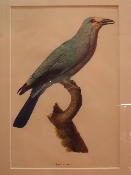 velins-naturalistes-2