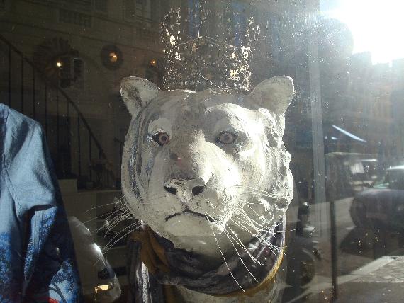 tigre-couronne