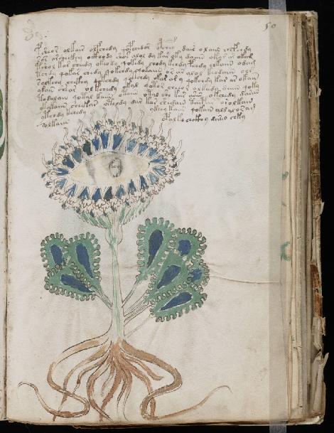 voynich-manuscrit-plante