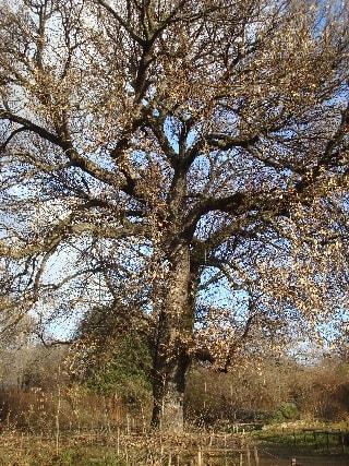 arbre-min