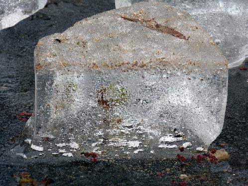 glace9-min