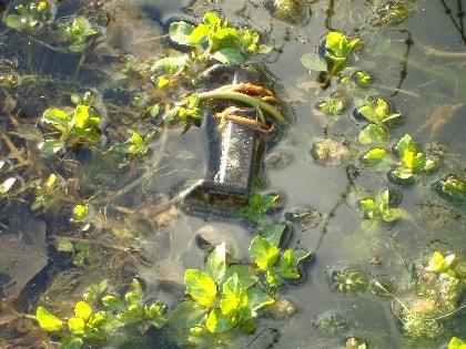 plantes-aquatiques-min