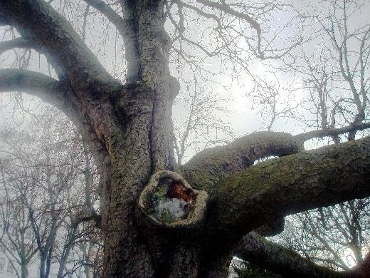 arbre lumiere-min