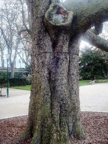 arbre-min (1)