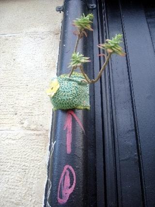 succulente-min
