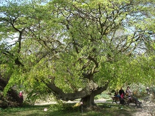 arbre et banc-min