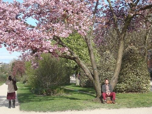 cerisier 10-min