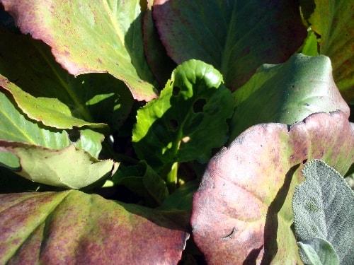 feuilles vertes et rouges-min