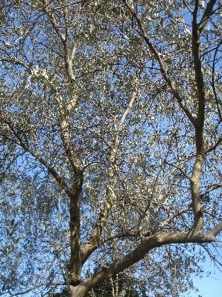 olivier-min