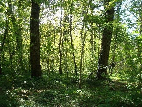 forêt st germain-min