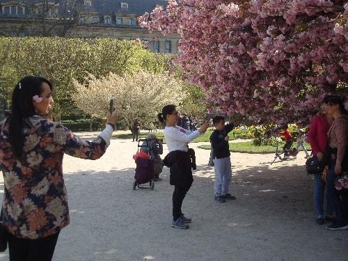 photos sous le cerisier-min (1)