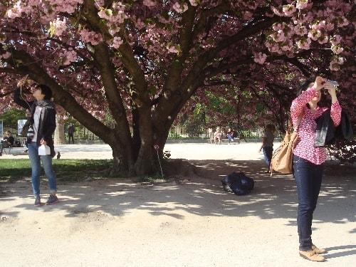 sous le cerisier-min (1)