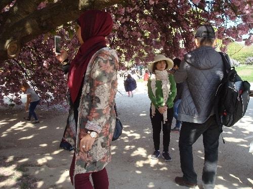 sous le cerisier rose-min