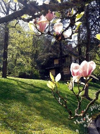 tulipier et datcha-min