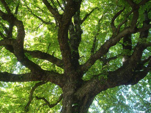 arbre cimetiere montmartre,
