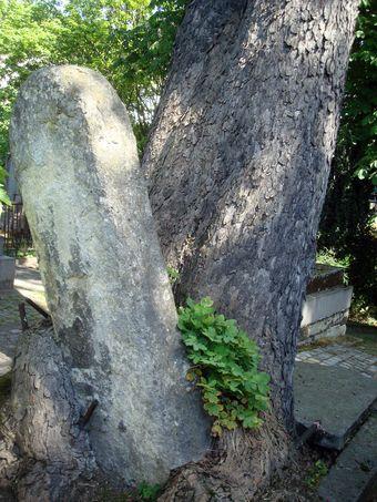 arbre et pierre cimetiere montmartre