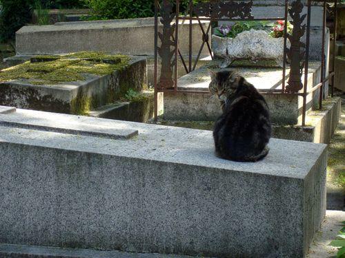 chat cimetiere montmartre