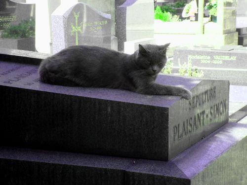 chat gris cimetiere montmartre