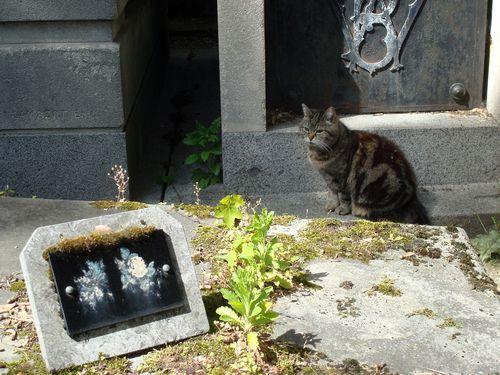 chat tigré cimetiere montmartre
