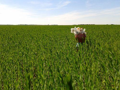 mme terre dans les blés