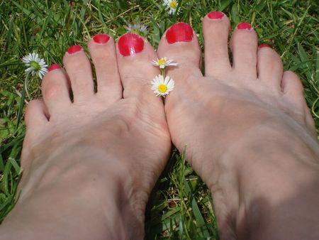 pieds et pâquerettes