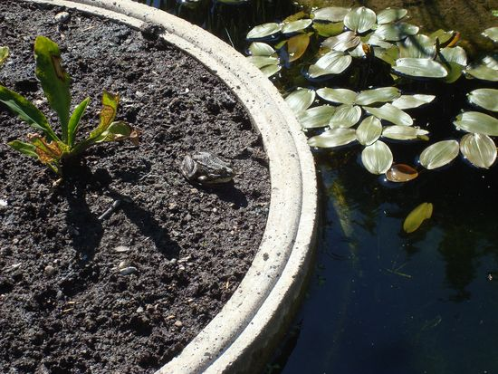 jardin 10 bassin